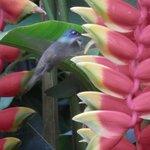 holistico's colibri