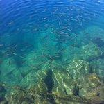 Fish in Puerto Mogan