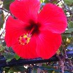 Flower in Puerto Mogan