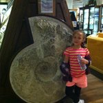 A large fossil - although nowhere near the largest!!