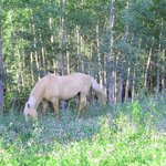 One of the 35 horses on the property, grazing.