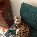 The house cat Leopold! Be sure to pet him, SO SOFT.