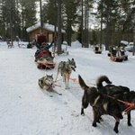 our husky ride in lapland