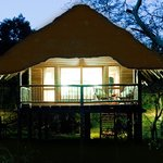 Tree Lodge rooms are set on wooden stilts in our Fever Tree forest