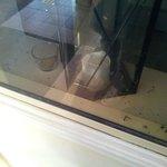 Dekofenster beim Treppenabgang von den Zimmern - dreckig, Fliegenleichen, wird nie geputzt
