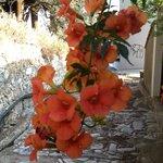 Flowers in bloom in Makrinitsa