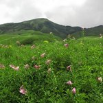 Dzukou lilies- endemic to the valley