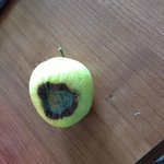 Rotten apple found in room