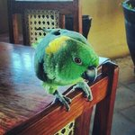 Breakfast area with Ruben the parrot