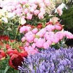 Beautiful flowers in the market