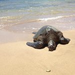 Turtle on the beach