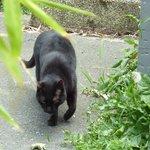 le chat de la maison en balade