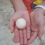 Turtle egg found on the beach