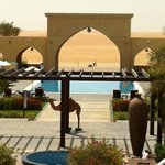 """Infinity pool with a """"real"""" camel in the background."""