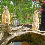 parque natural de Cabárceno, visita obligada