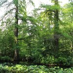 Botanical Garden Bucharest