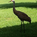 Crane greeted us in the morning