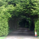 The hedge driveway #1.