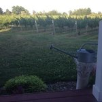 view of the vineyards ..
