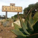 Foto de Quercus Restaurant