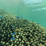 Lissenung House Reef