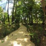Beautiful, lush tropical grounds