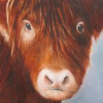 Peter's painting of a Highland Calf