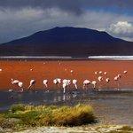 Laguna Colorada with so many colours