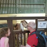 Getting friendly with a goat!