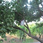 Un nido sull'albero