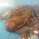 a 15 pound lobster just brought in by a local lobsterman.