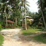 Вид на Тихие Пальмы