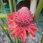Цветы на территории Тихих Пальм