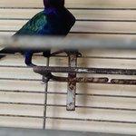 Uccellino nell'atrio