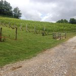 Linville Falls Winery Foto
