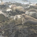 Seals on nearby rocks, just in front of property