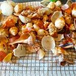 shells found on Captiva Beach