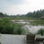 View from pool over lower deck with sun-loungers over harvested rice paddies