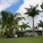 Island Goode's grounds