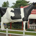 The concrete cow