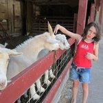 Petting the animals.