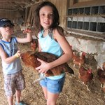 Holding a hen.