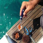 sea urchin from the source