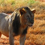 Toursafarikenya - Private Day Tour