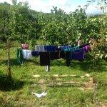 backyard clothesline