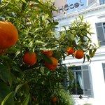l'oranger du jardin
