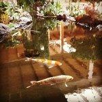 Koi pond in lobby