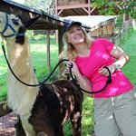 Happy the llama before our trek.
