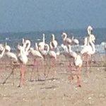 Flamingos on the beach.