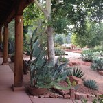 View of cactus garden